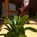 20120310_orkideak eta landareak-11
