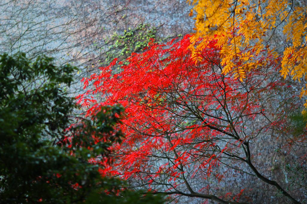 Miyajima One day tour Part2 (6)