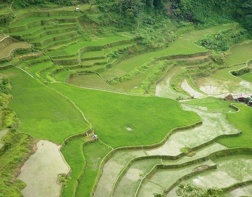 Luzon-Bangaan (110)