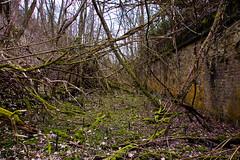 Arbres, branches, piquets, ronces, pas facile ^^
