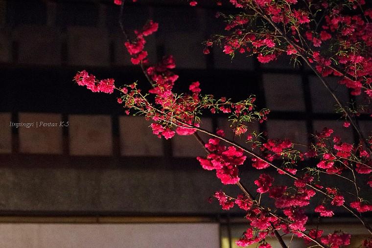 [K-5,F70-210]晚上好,櫻花妹。 (圖多)