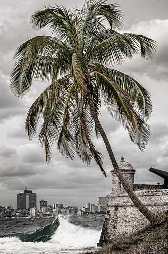 Habaneciendo... by Rey Cuba