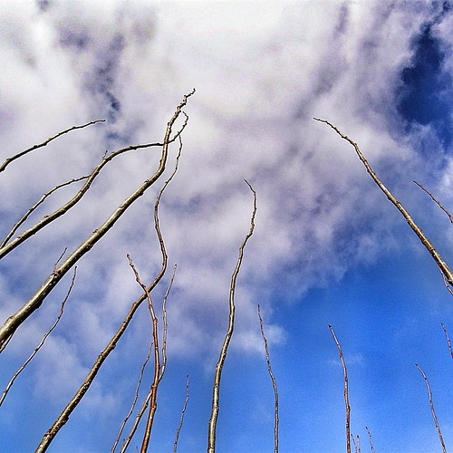 75/366: towards the sky