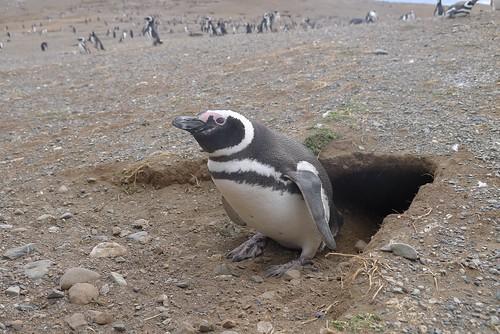 Punta Arenas-117