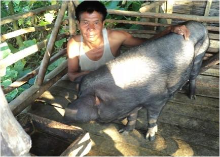 Nagaland pig farmer Manpai Konyak