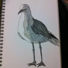 sketch: Seagull
