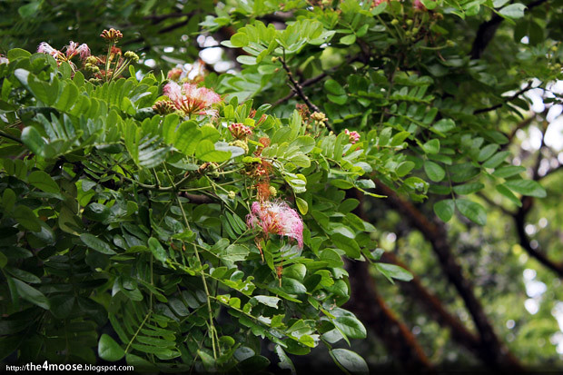 Tanglin - Flowers