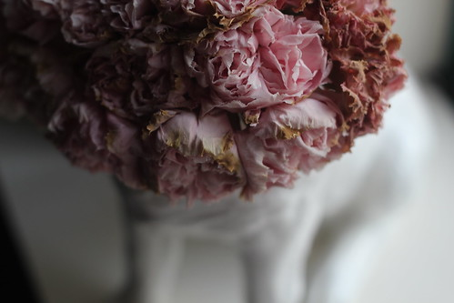 Saturday: dying carnations