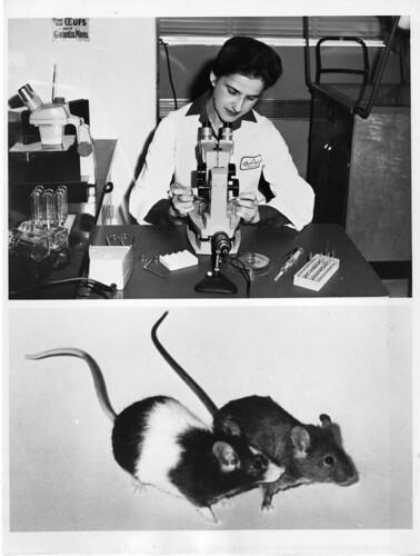 Experimente mit Mäusen: Ein Klassiker. Aber selten so brutal wie bei Falk.