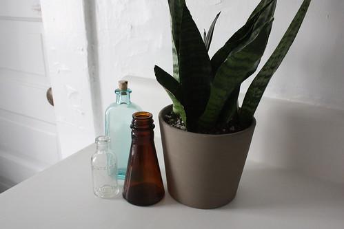 vintage bottles snake plant Glass and Sable
