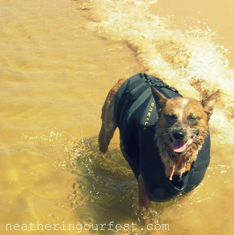 swimmin pups2