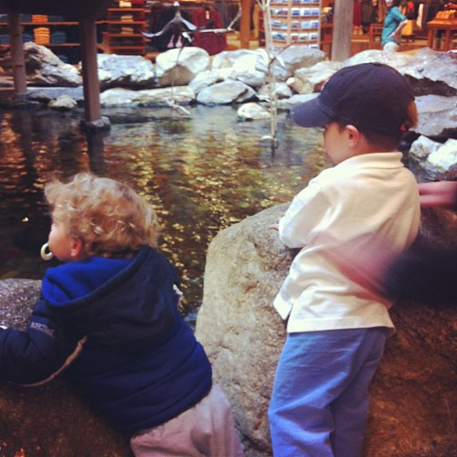 Watching the fish at LL Bean flagship store in Maine