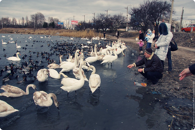 swans-24-2-12-09