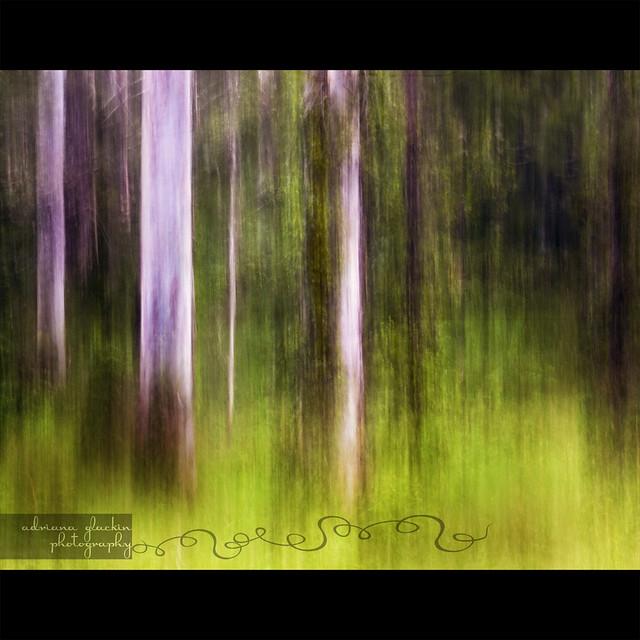 Mitchell Park ~ Impressions 3