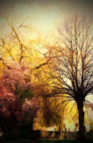 street trees wales geotagged lumix badger vignette orton abergavenny lx2 photographer1 steverichards geo:lat=5182165072166794 geo:lon=3016005543302901