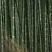 Arashiyama 嵐山 - 05