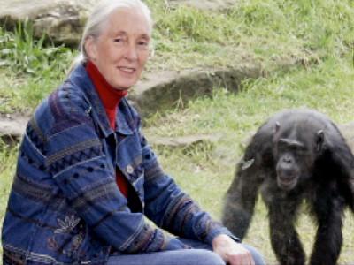 1120330742_7456248001_Bio-Biography-Jane-Goodall-SF-142447265001