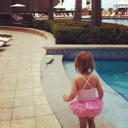 Chasing a baby iguana