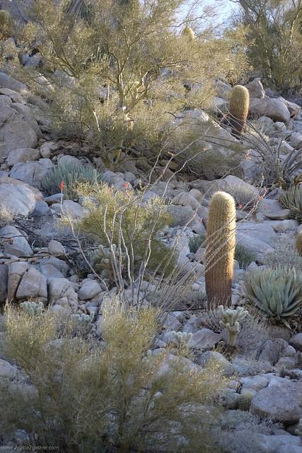 Desert scenes/plants, Off Hwy 3