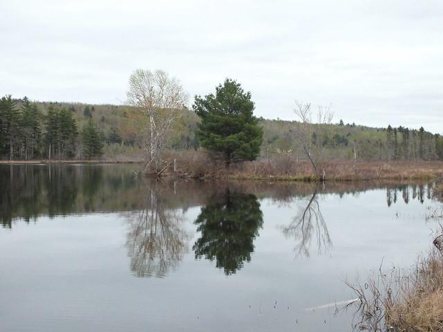 Pickerel pond wayne 3 flickr photo sharing for 7194 garden pond