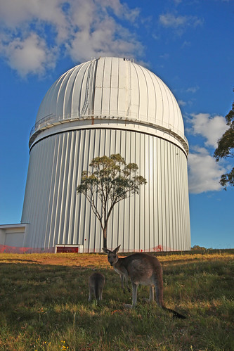 Kangaroos and AAT. 25 Mar 2012