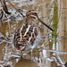 Wilson's Snipe - Photo (c) Larry Meade, some rights reserved (CC BY-NC-SA)