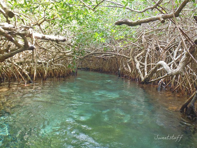 Mangrove water trail