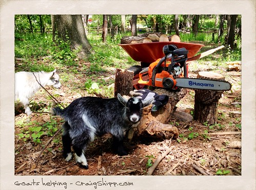 Goats helping out at the estate. by CraigShipp.com Photos - Events / People / Places