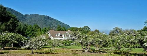 mountains spring farming apples blooms pinetrees appleorchard appleblossoms mountainhome oakglenca dgrahamphoto