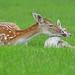 Awww, mum! by Wildlife Online