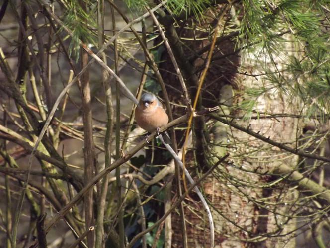 lttlebird