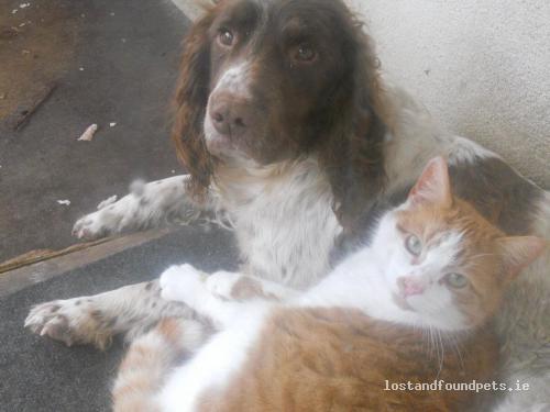 [Updated] Thu, Feb 23rd, 2012 Lost Female Dog - Kildoon, Nurney, Kildare