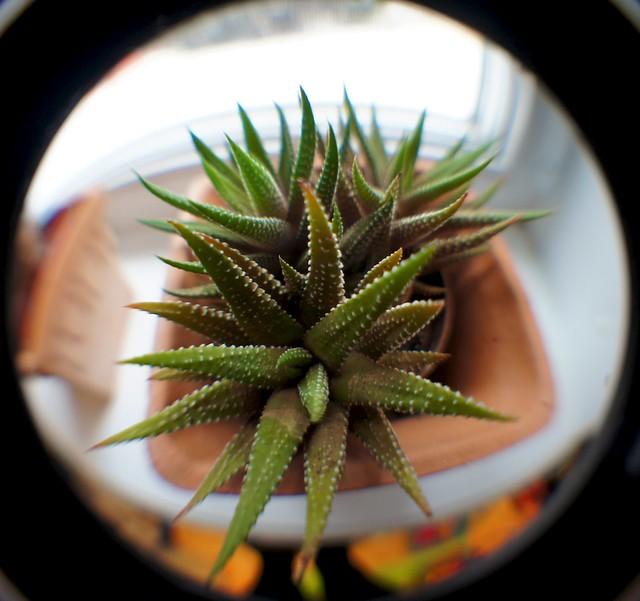 anteketborka_cactus5