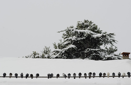 roof sky snow cold tree wire nikon tetto pigeons cable company cielo neve albero freddo compagnia filo 80200mm piccioni cavo d7000