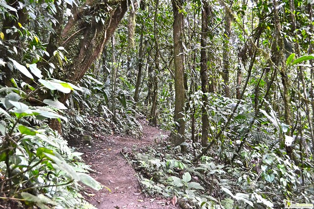Hiking in Costa Rica - Tips to Find the Right Trail for You