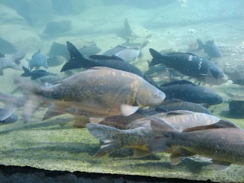 Bronx Zoo: Fish  #1
