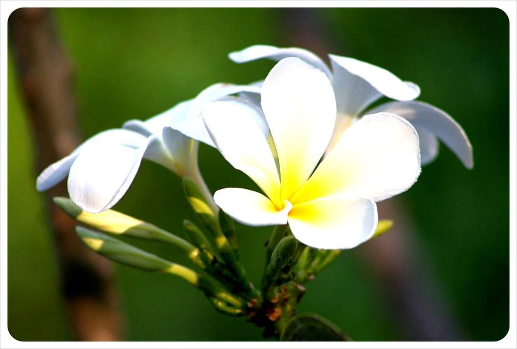hostel flower