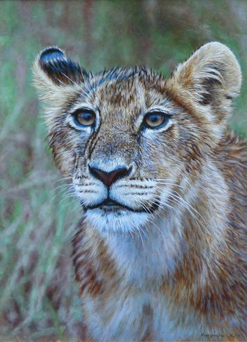 "'Lion Cub Portrait' oil on board 12¼"" x 9"