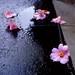 水たまりの花