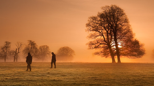 mist misty sunrise dawn quiet tranquility slough berkshire kevday tranquil langleypark