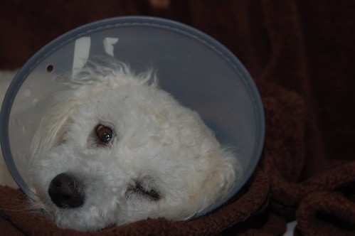 March 13: Juanita in her E-Collar
