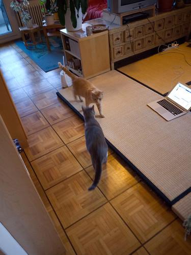 New Cats 2.jpg
