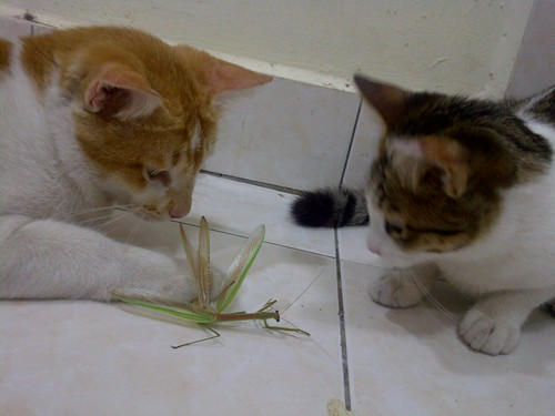 Mantis and Cats by rizauddin