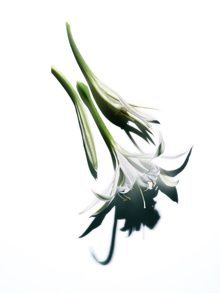 Clarins---Sea-Lily