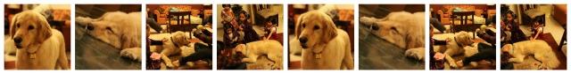 india pet relocation