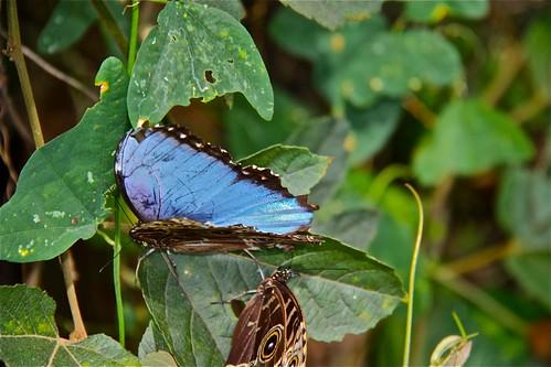 Butterfly Garden 05
