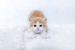 [フリー画像素材] 動物 1, 猫・ネコ, 子猫・小猫 ID:201202171000