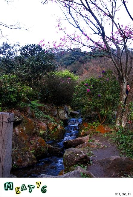 【遊記】陽明山國家公園|櫻花乍現在粉紅意境的花花世界25