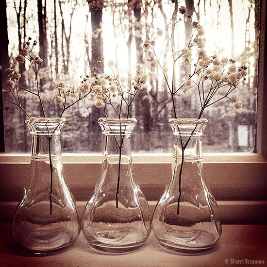 Three vases instagram