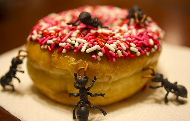 donut ants